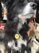 Pet Collar Charm- I Love Tennis Balls