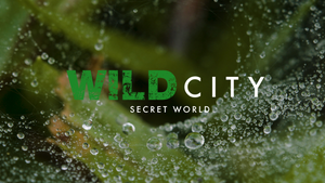 Wild City: Secret World