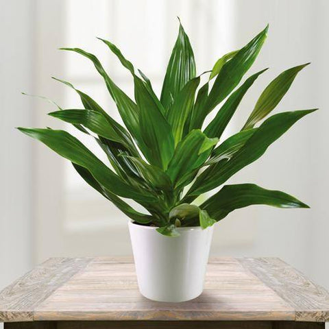 janet craig best house plants for removing air pollutants