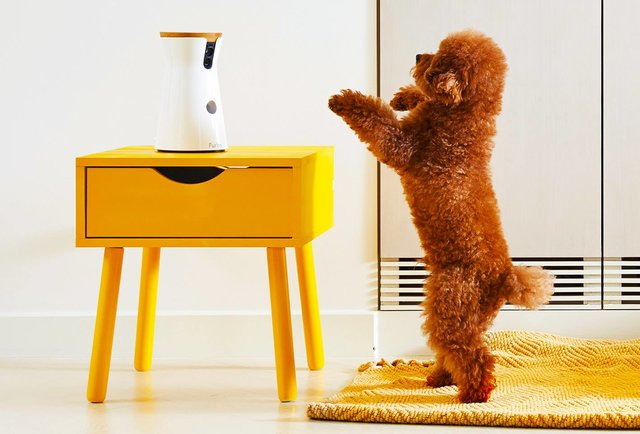 5 Reasons Your Dog Needs This Treat Dispensing Dog Camera!