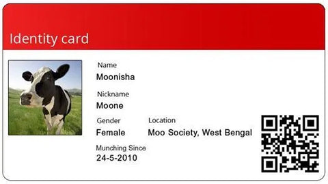 cow photo ID card