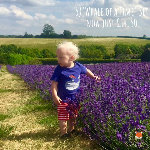 toddler wearing whale of a time outfit from cotswold baby co in a lavender field in the cotswolds