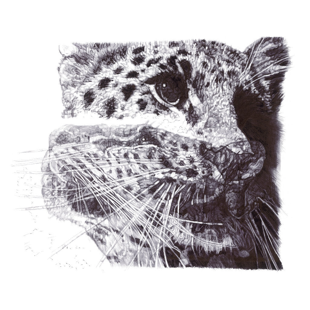 Our Loss Amur Leopard