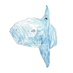Sunfish by Jude Exhibition Print
