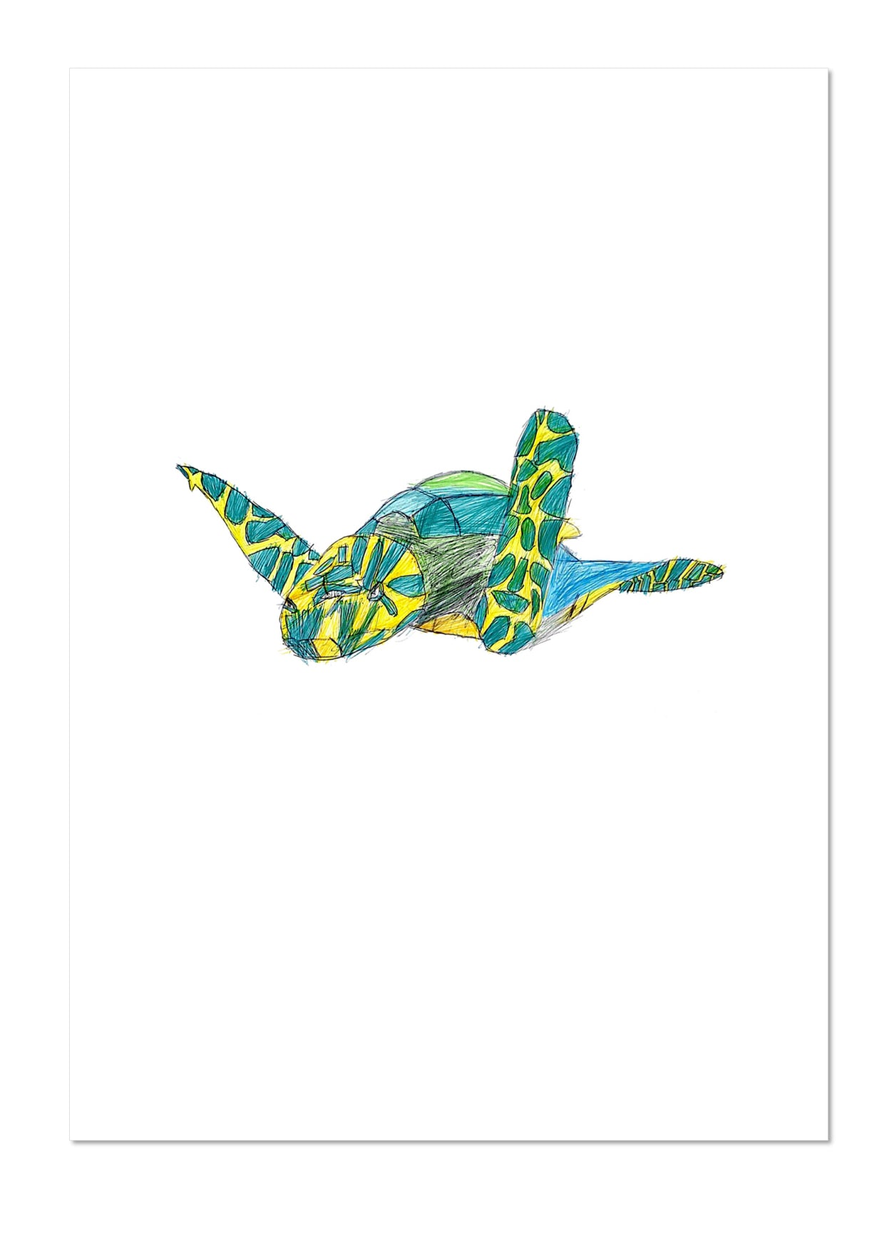 Turtle by Daniel Exhibition Print