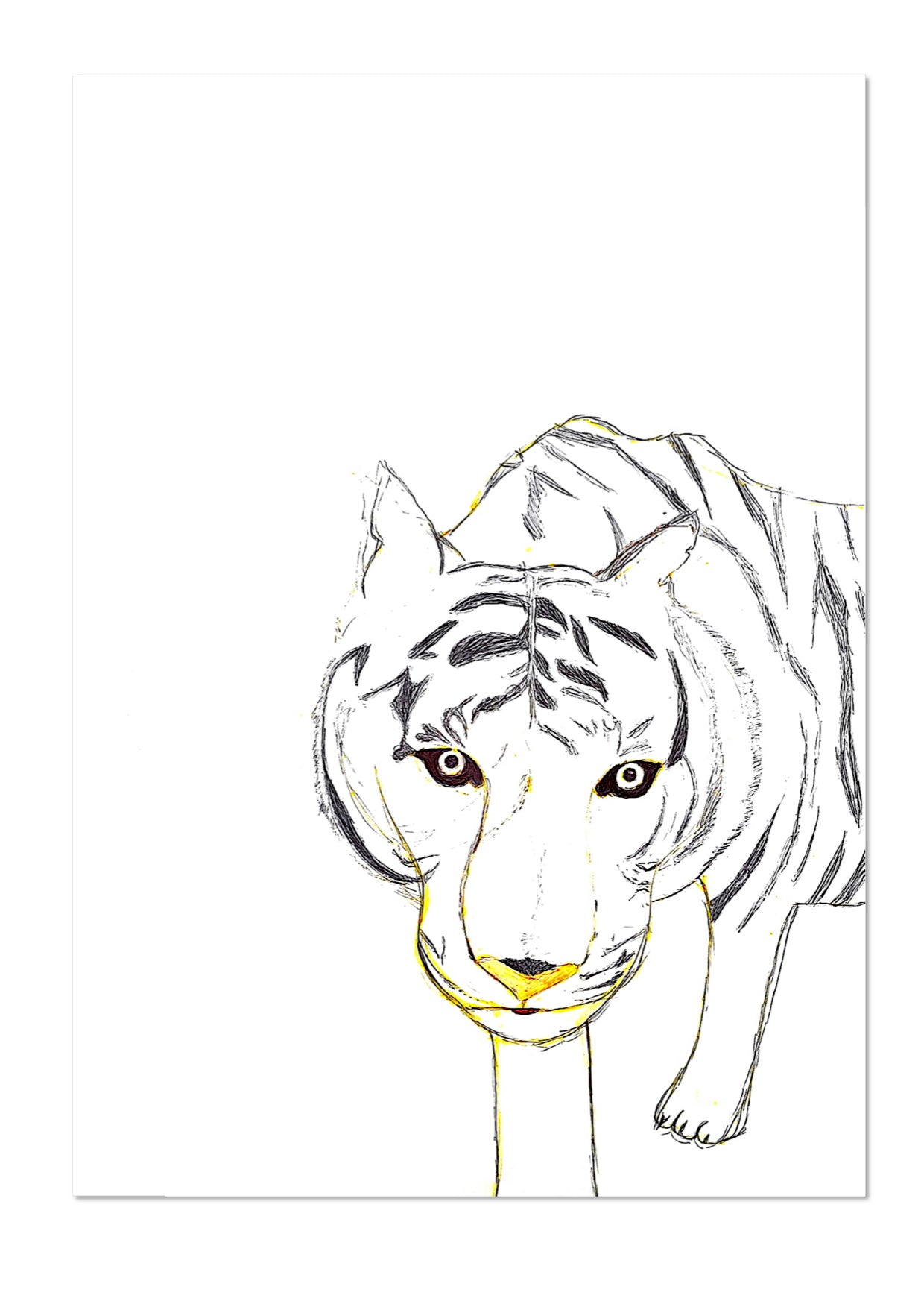 Tiger by Hannah Exhibition Print