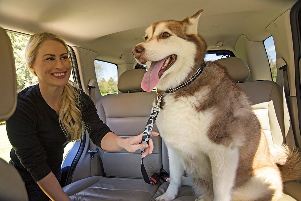 How To Safely Travel With A Dog In A Car
