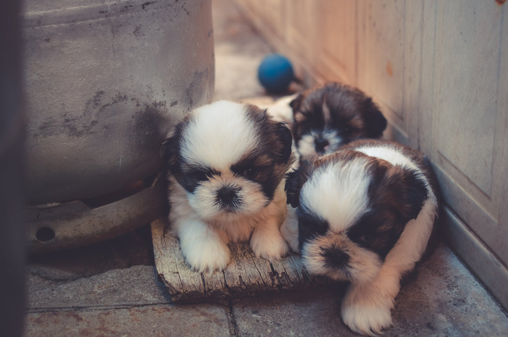 Why Raising Two Pups at the Same Time isn't a Good Idea