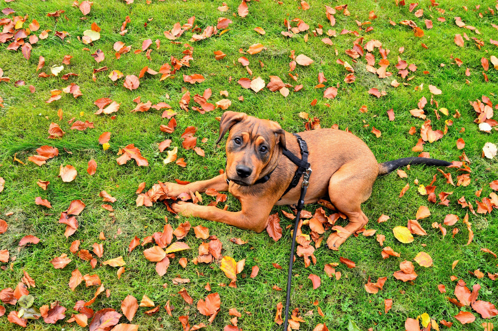 6 Tips to Stop Your Dog From Pulling on Leash