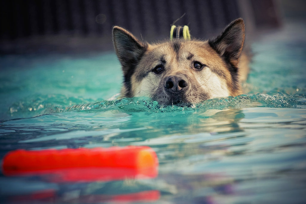 Best Dog Training Methods
