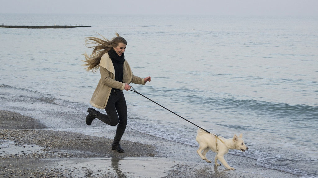 Best Tips On How To Safely Walk And Run With Your Dog!