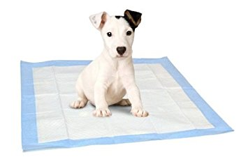 A puppy is sitting on a puppy pee pad