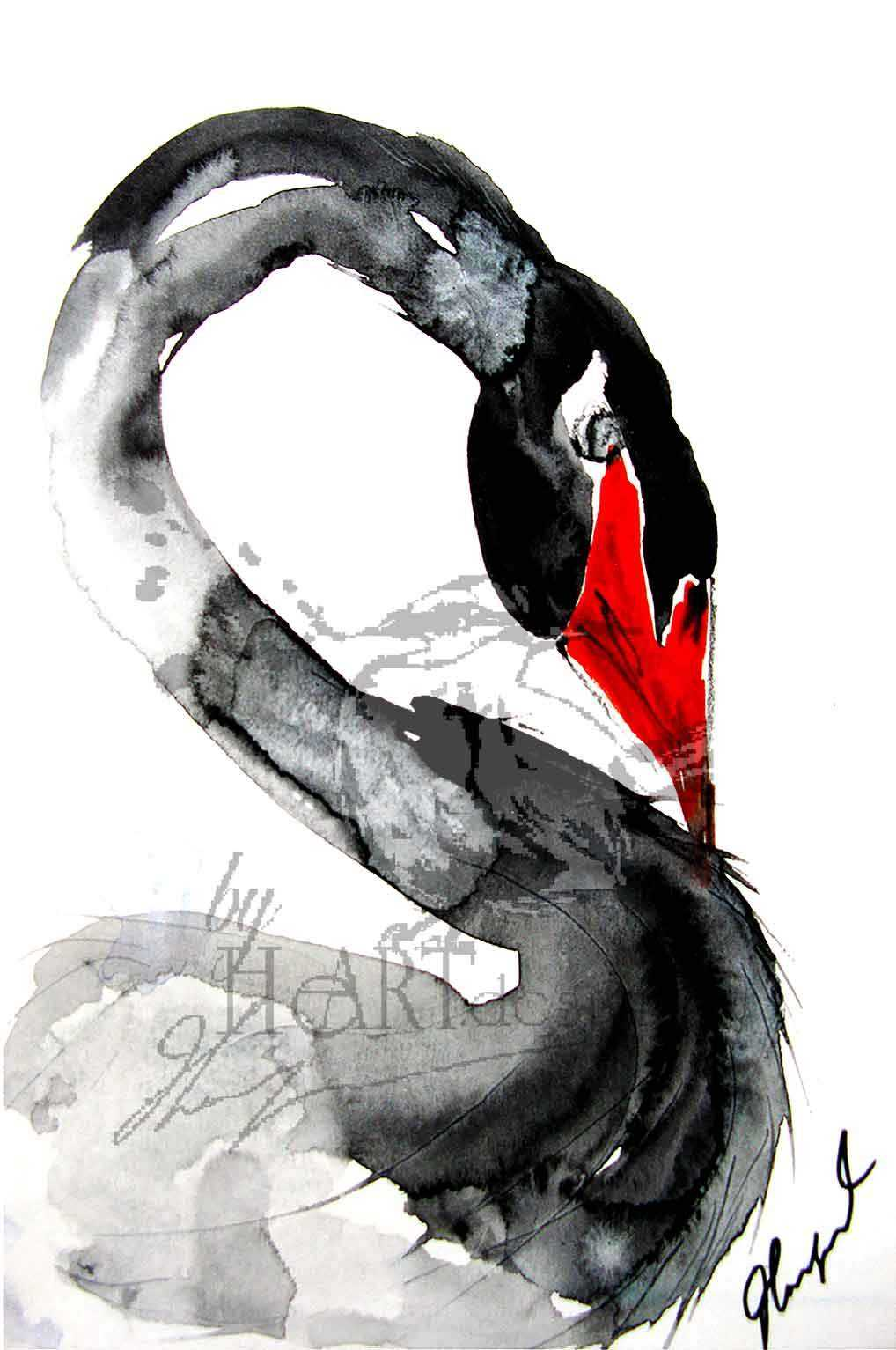ART BIRDS, THE BLACK SWAN IS PROUD