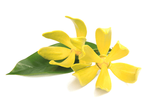 Ylang Ylang essential oil 10ml - i-Spa