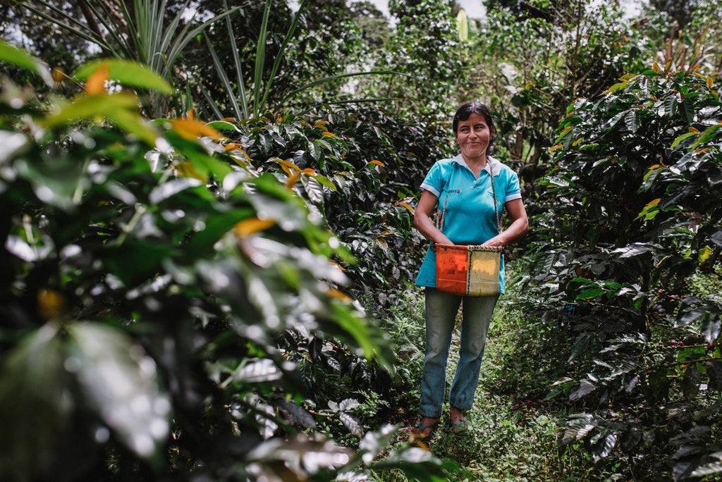 Meet Rosa, our second partner-farmer.