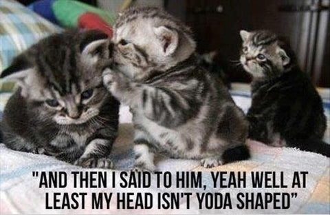 Yoda Shaped Cat Head