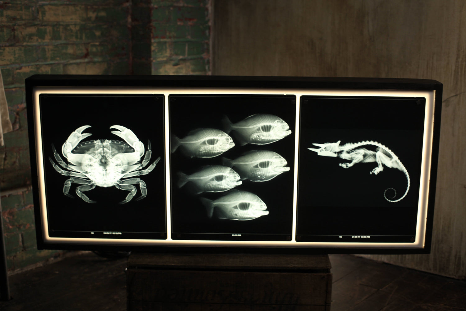 X Ray Lightbox
