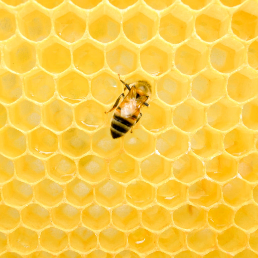 How do bees make beeswax?
