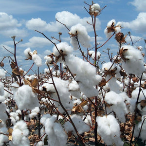 Why we only use GOTS certified organic cotton