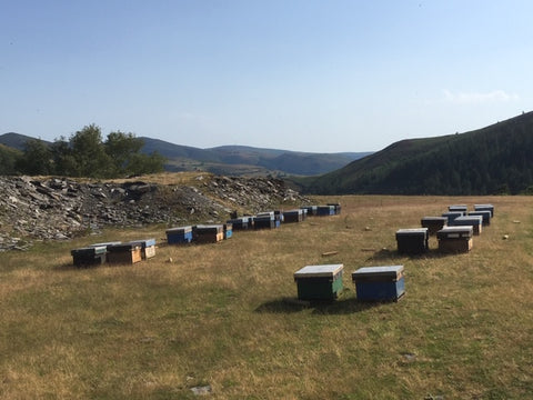 Bee hives on heather moors