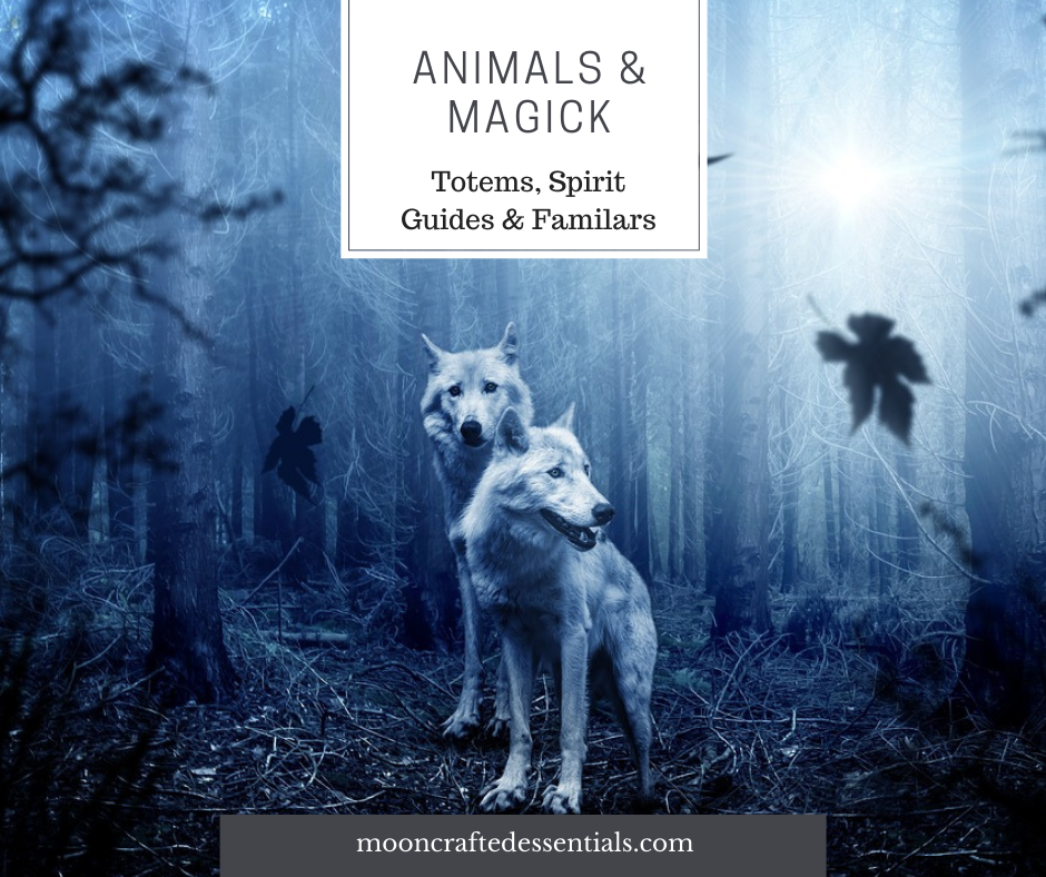 Animals & Magick- Totems, Spirit Animals & Familiars