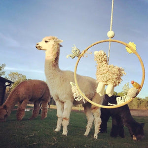 products/Our_Alpaca_Dream_Ring__in_the_real_world..._this_guy_doesn_t_know_what_to_think_of_it.__blablakids__sweetolivefarm__alpaca.jpg