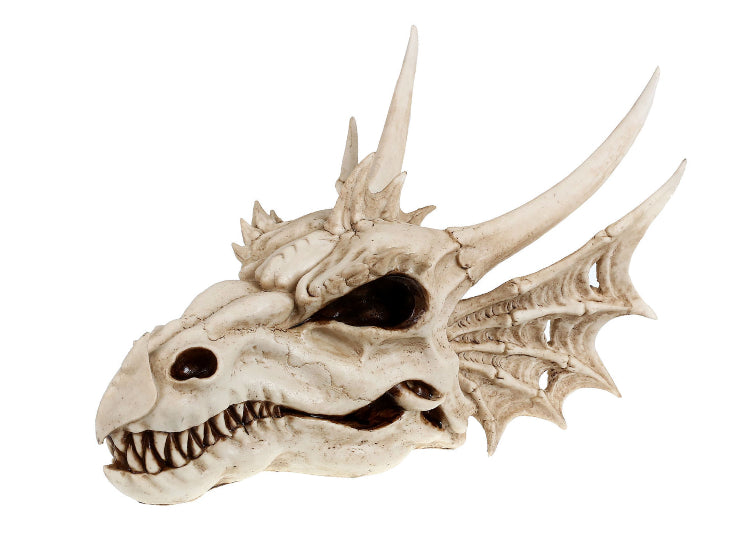 Dragon Skull (Medium)