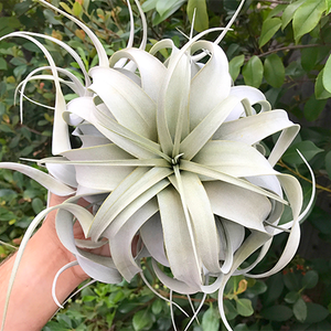 Meet the Maker: Nathanael Miller of the Air Plant Hub