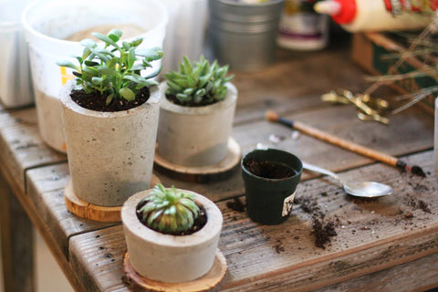 Akela Designs, concrete planters and healing elements for the home