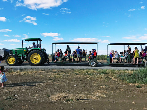 Farm Fresh to You, Capay Organic Tractor Rides