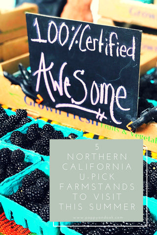 Northern California U-Pick Farmstands to Visit this Summer