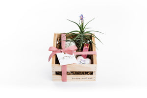 Best Friends Gift Box featuring candle, lip balm, air plant, and shower steamer or bath bomb