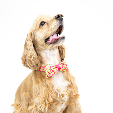 Lifestyle image of our Pet Collar