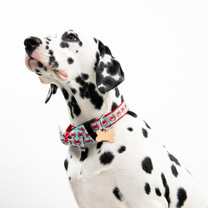 Lifestyle view of our Nautical Crab Bowtie Collar