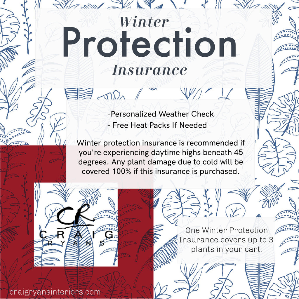 CRAIG RYANS Winter Protection Insurance
