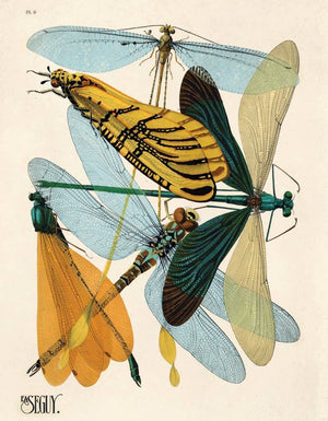 Vintage Natural History Dragonflies