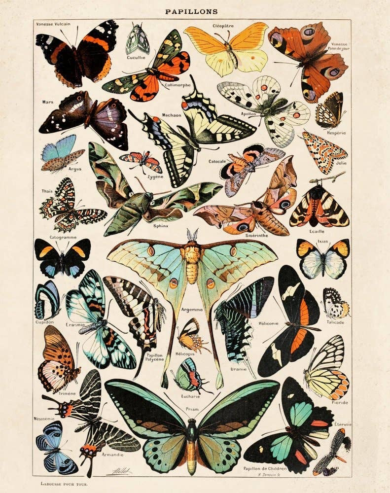Vintage Natural History French Butterflies