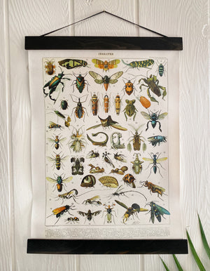 Vintage French Insect Chart