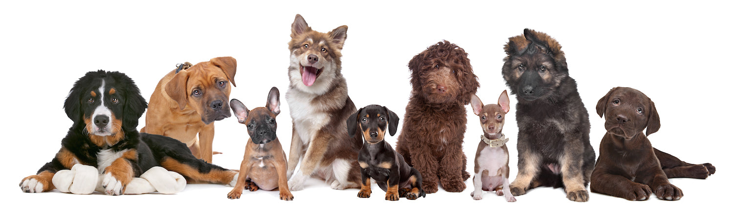 Various breeds of dogs