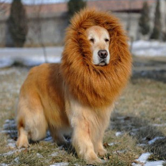 Glorious Lion Mane - Puppernaut Dog Supplies
