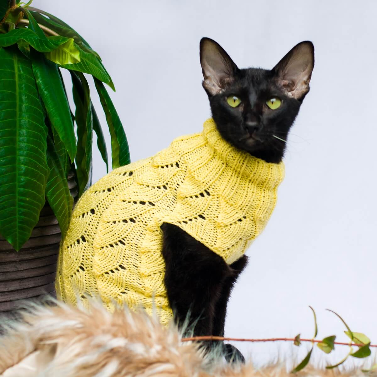 All Seasons openwork knit cat sweater for hairless cats