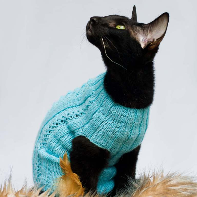 cat sweater with no sleeves in blue