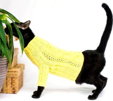 cat sweater with long sleeves in yellow
