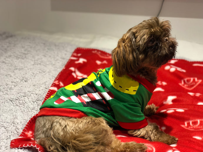 Elf outfit for your pet