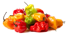 Scotch Bonnet Peppers 60g 6pcs