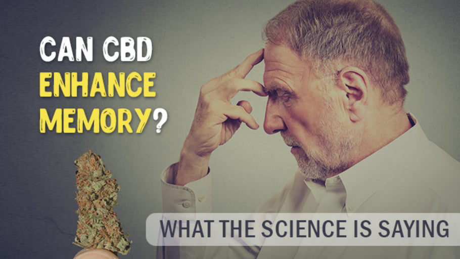 Il CBD e la memoria - Cannabis Light news