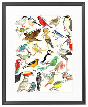 The A-Z of Birds