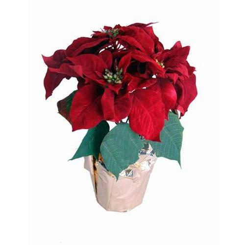 "15.5"" Potted Artificial Red Poinsettia Plant with Gold Foil Covering"