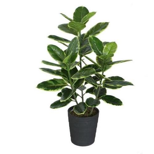 "36.5"" Decorative Potted Artificial Green and White Rubber Plant"