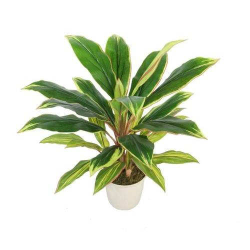 "25"" Decorative Potted Artificial Green and Red Dracaena Plant in a Cream White Pot"